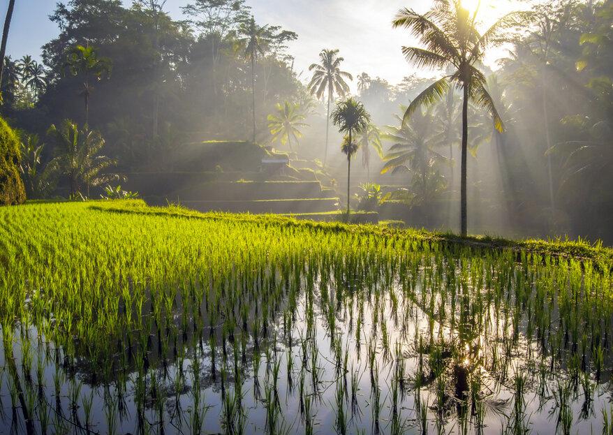 Voyage de noces en Indonésie : partez à la découverte de l'île de Bali