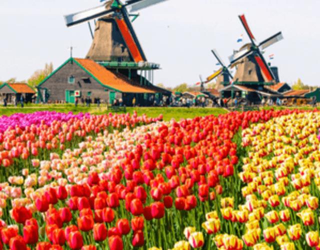 Les meilleurs prestataires pour votre mariage - Gelderland